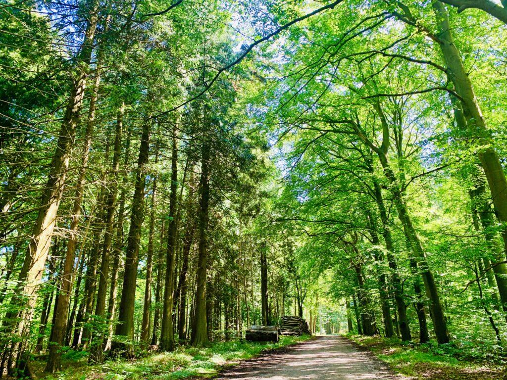 Skoven på vej til Pomleranden
